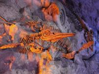 Was muss ein Archäologe so alles leisten können